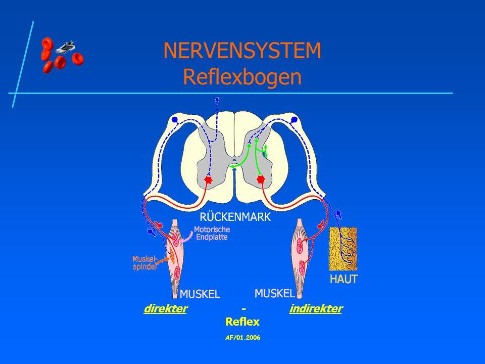 AF/01.2006 NERVENSYSTEM Reflexbogen direkter-indirekter Reflex