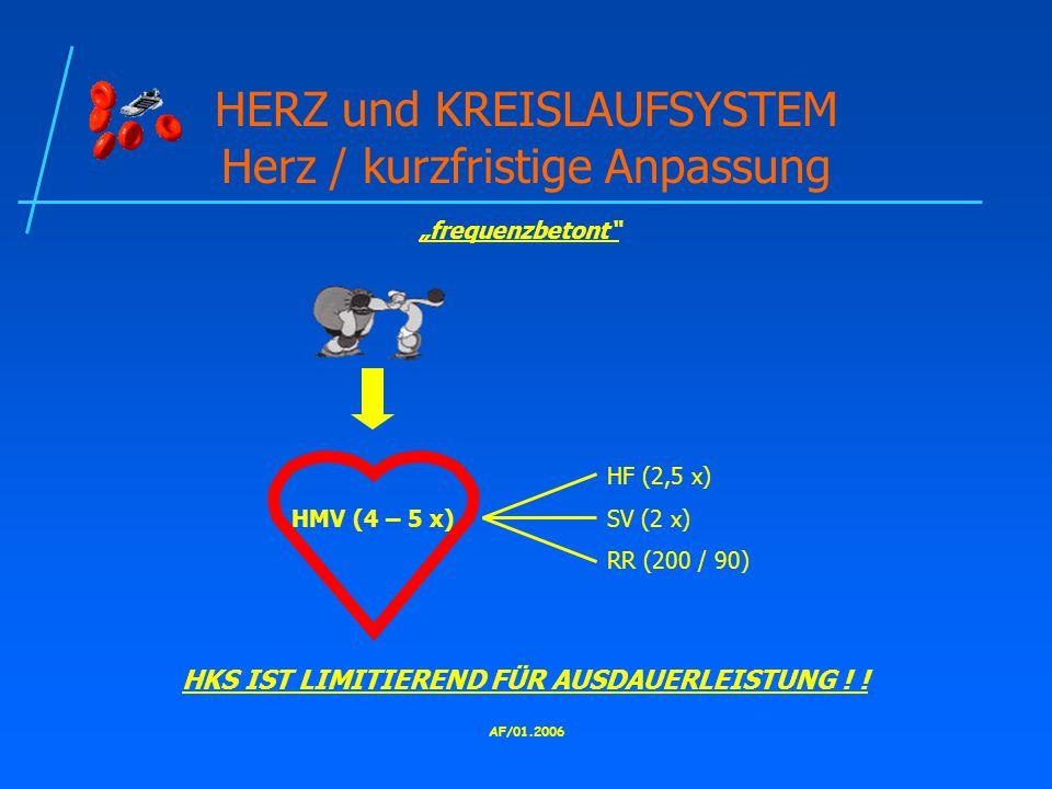 AF/01.2006 HERZ und KREISLAUFSYSTEM Herz / kurzfristige Anpassung HF (2,5 x) HMV (4 – 5 x)SV (2 x) RR (200 / 90) HKS IST LIMITIEREND FÜR AUSDAUERLEISTUNG .
