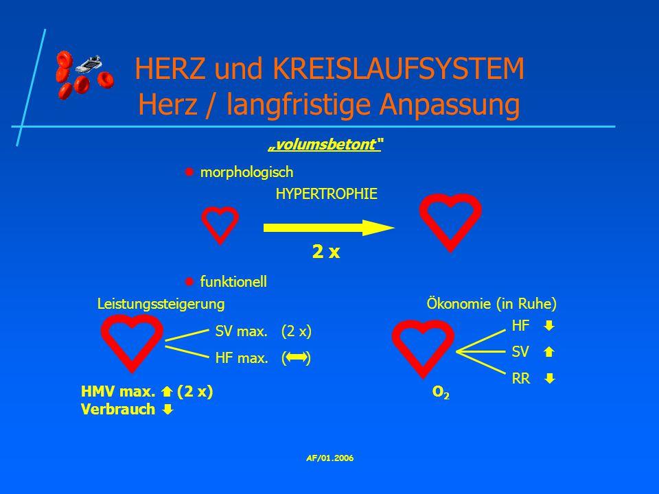 AF/01.2006 HERZ und KREISLAUFSYSTEM Herz / langfristige Anpassung  morphologisch HYPERTROPHIE 2 x  funktionell LeistungssteigerungÖkonomie (in Ruhe) SV max.(2 x) HF max.( ) HMV max.