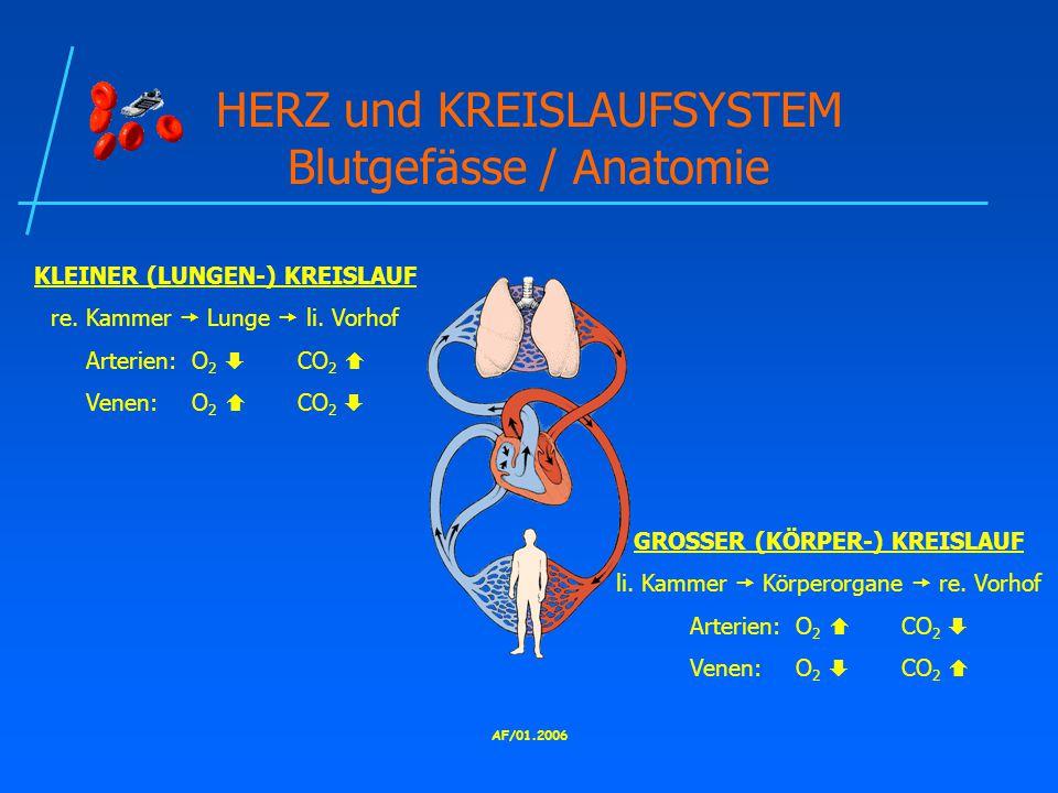 AF/01.2006 HERZ und KREISLAUFSYSTEM Blutgefässe / Anatomie KLEINER (LUNGEN-) KREISLAUF re.
