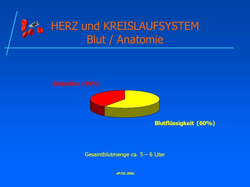 AF/01.2006 HERZ und KREISLAUFSYSTEM Blut / Anatomie Blutzellen (40%) Blutflüssigkeit (60%) Gesamtblutmenge ca.