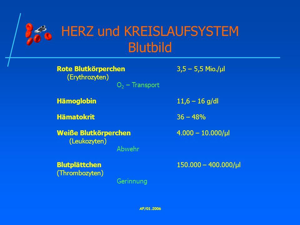 AF/01.2006 HERZ und KREISLAUFSYSTEM Blutbild Rote Blutkörperchen3,5 – 5,5 Mio./μl (Erythrozyten) O 2 – Transport Hämoglobin11,6 – 16 g/dl Hämatokrit36 – 48% Weiße Blutkörperchen4.000 – 10.000/μl (Leukozyten) Abwehr Blutplättchen150.000 – 400.000/μl (Thrombozyten) Gerinnung