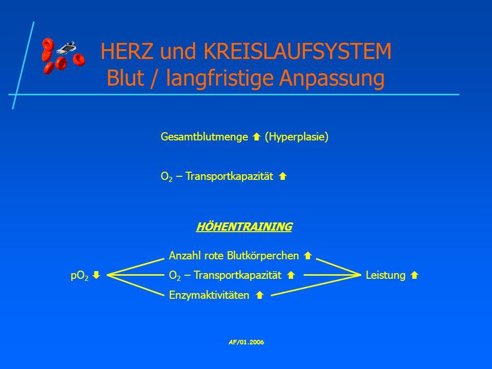AF/01.2006 HERZ und KREISLAUFSYSTEM Blut / langfristige Anpassung Gesamtblutmenge  (Hyperplasie) O 2 – Transportkapazität  HÖHENTRAINING Anzahl rote Blutkörperchen  pO 2  O 2 – Transportkapazität  Leistung  Enzymaktivitäten 