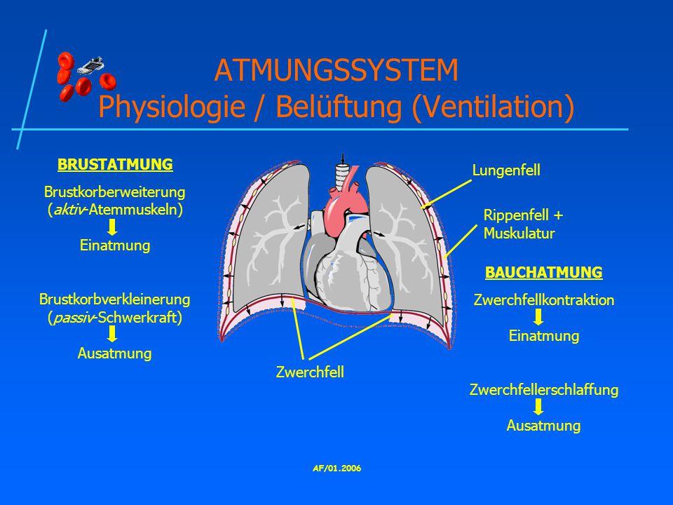 AF/01.2006 ATMUNGSSYSTEM Physiologie / Belüftung (Ventilation) Zwerchfell Lungenfell Rippenfell + Muskulatur BRUSTATMUNG Brustkorberweiterung (aktiv-Atemmuskeln) Einatmung Brustkorbverkleinerung (passiv-Schwerkraft) Ausatmung BAUCHATMUNG Zwerchfellkontraktion Einatmung Zwerchfellerschlaffung Ausatmung