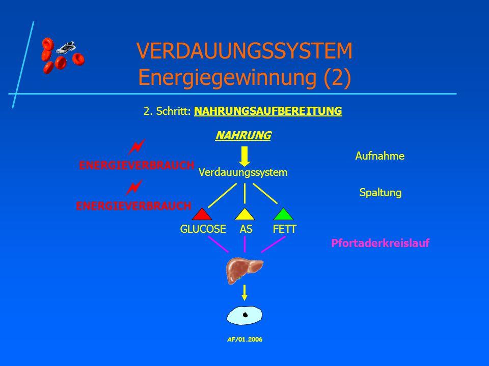AF/01.2006 VERDAUUNGSSYSTEM Energiegewinnung (2) 2.
