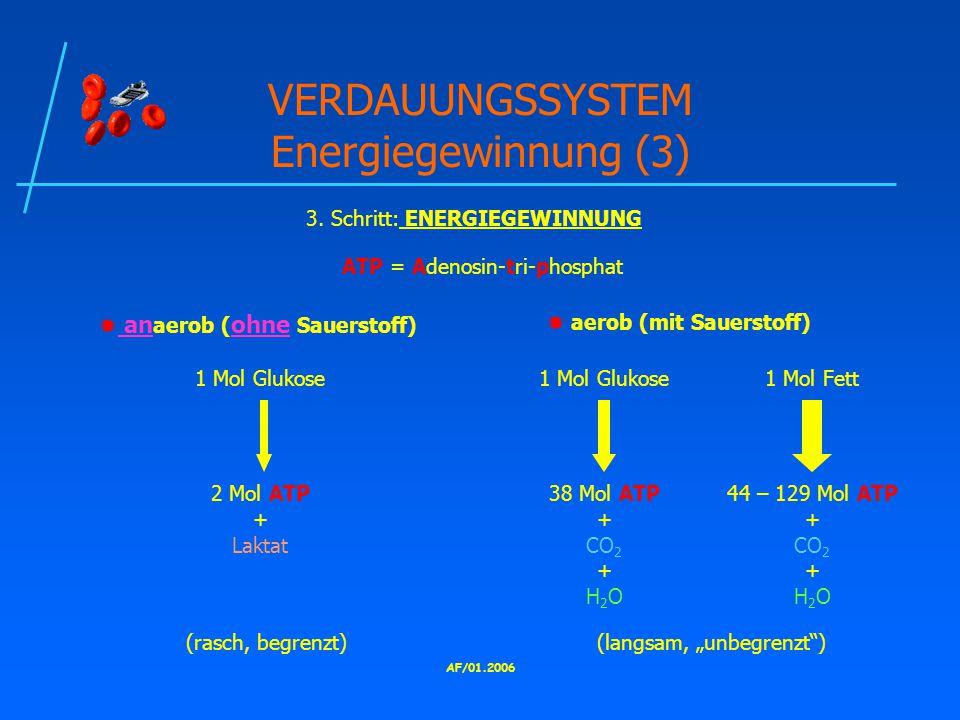 AF/01.2006 VERDAUUNGSSYSTEM Energiegewinnung (3) 3.