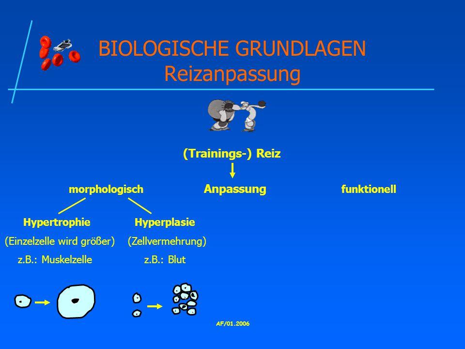 AF/01.2006 BIOLOGISCHE GRUNDLAGEN Reizanpassung morphologisch Anpassung funktionell (Trainings-) Reiz Hypertrophie Hyperplasie (Einzelzelle wird größer) (Zellvermehrung) z.B.: Muskelzelle z.B.: Blut