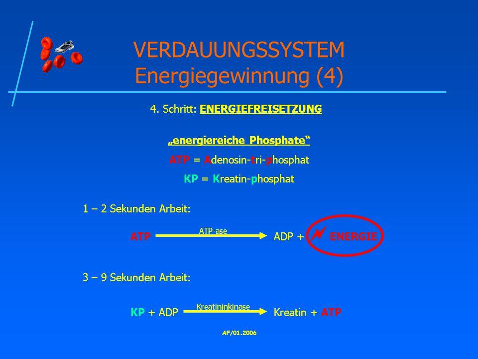 AF/01.2006 VERDAUUNGSSYSTEM Energiegewinnung (4) 4.