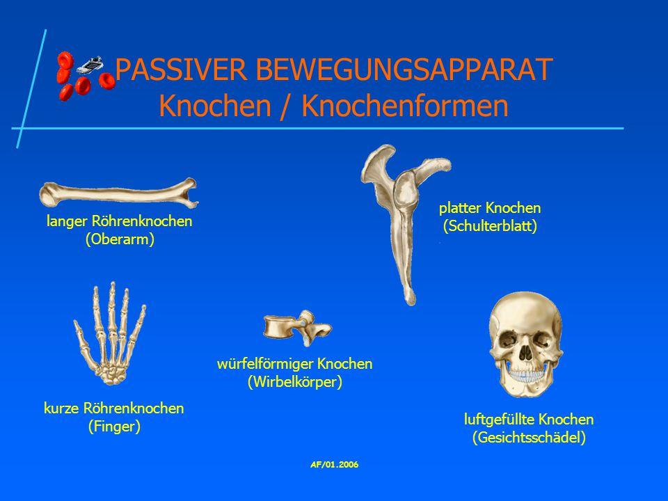 AF/01.2006 PASSIVER BEWEGUNGSAPPARAT Knochen / Knochenformen langer Röhrenknochen (Oberarm) kurze Röhrenknochen (Finger) platter Knochen (Schulterblatt) würfelförmiger Knochen (Wirbelkörper) luftgefüllte Knochen (Gesichtsschädel)