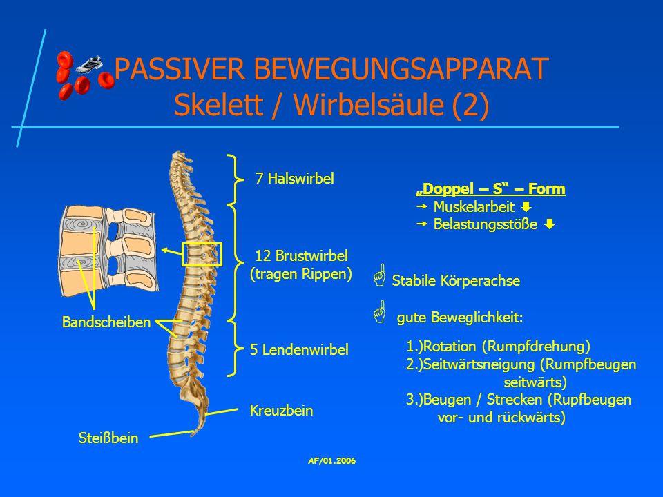 """AF/01.2006 PASSIVER BEWEGUNGSAPPARAT Skelett / Wirbelsäule (2) 7 Halswirbel 12 Brustwirbel (tragen Rippen) 5 Lendenwirbel Kreuzbein Steißbein """"Doppel – S – Form  Muskelarbeit   Belastungsstöße   Stabile Körperachse  gute Beweglichkeit: 1.)Rotation (Rumpfdrehung) 2.)Seitwärtsneigung (Rumpfbeugen seitwärts) 3.)Beugen / Strecken (Rupfbeugen vor- und rückwärts) Bandscheiben"""