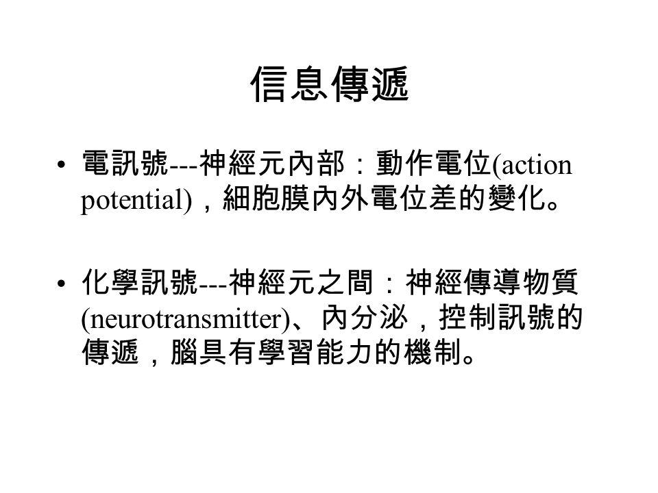 信息傳遞 電訊號 --- 神經元內部:動作電位 (action potential) ,細胞膜內外電位差的變化。 化學訊號 --- 神經元之間:神經傳導物質 (neurotransmitter) 、內分泌,控制訊號的 傳遞,腦具有學習能力的機制。