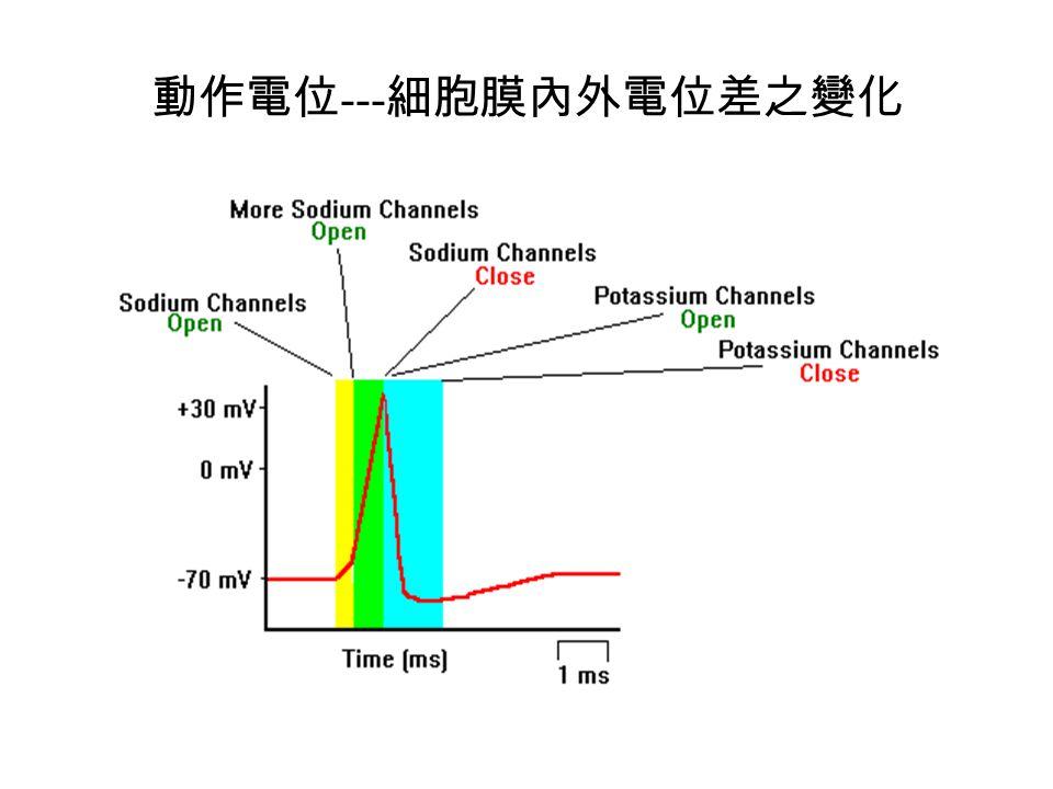 動作電位 --- 細胞膜內外電位差之變化