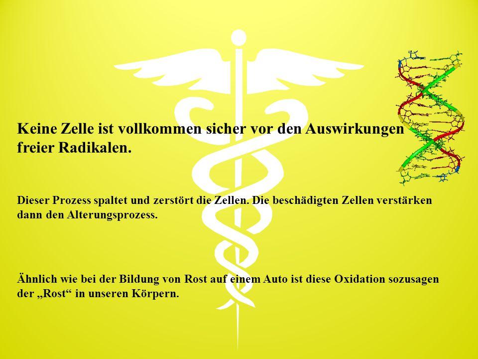 Apolipoprotein E-Polymorphismen Allel-Frequenz GenotypHäufigkeit in der deutschen Bevölkerung in %  2/  2 0,9  2/  3 10,7  3/  3 63,8  3/  4 21,3  4/  4 1,3  2/  4 2,1 Quelle: Schwandt P, Richter WO.