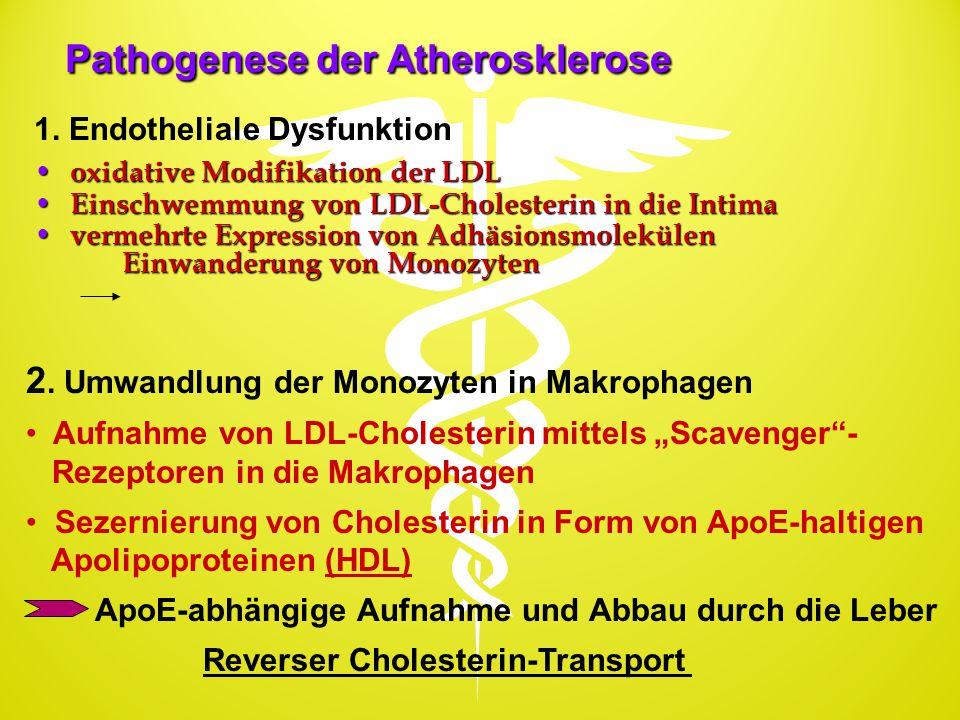 Pathogenese der Atherosklerose oxidative Modifikation der LDL oxidative Modifikation der LDL Einschwemmung von LDL-Cholesterin in die Intima Einschwem