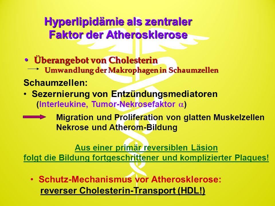 Hyperlipidämie als zentraler Faktor der Atherosklerose Überangebot von Cholesterin Überangebot von Cholesterin Umwandlung der Makrophagen in Schaumzel