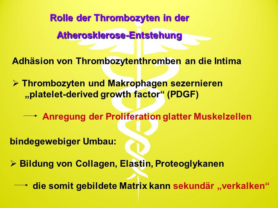"""Rolle der Thrombozyten in der Atherosklerose-Entstehung Adhäsion von Thrombozytenthromben an die Intima  Thrombozyten und Makrophagen sezernieren """"pl"""