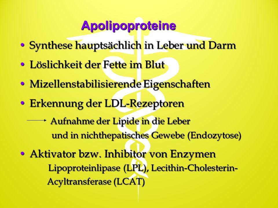Apolipoproteine Synthese hauptsächlich in Leber und DarmSynthese hauptsächlich in Leber und Darm Löslichkeit der Fette im BlutLöslichkeit der Fette im