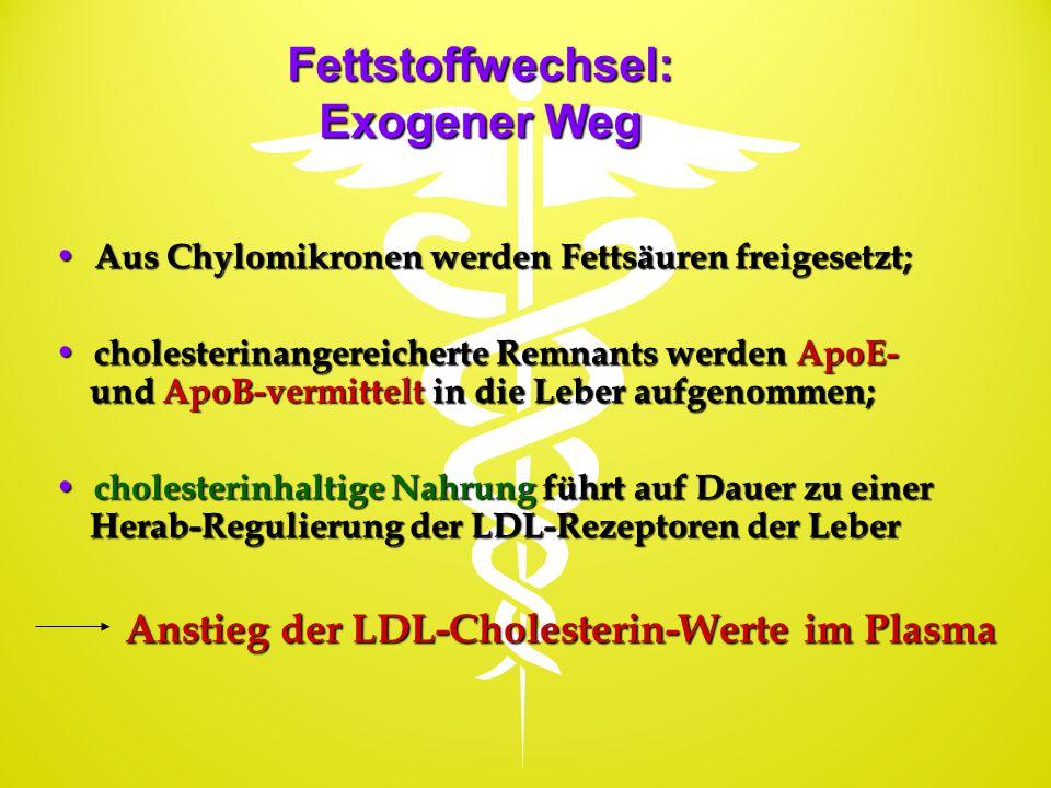 Fettstoffwechsel: Exogener Weg Aus Chylomikronen werden Fettsäuren freigesetzt; Aus Chylomikronen werden Fettsäuren freigesetzt; cholesterinangereiche