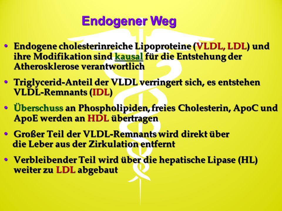 Endogener Weg Endogene cholesterinreiche Lipoproteine (VLDL, LDL) und ihre Modifikation sind kausal für die Entstehung der Atherosklerose verantwortli