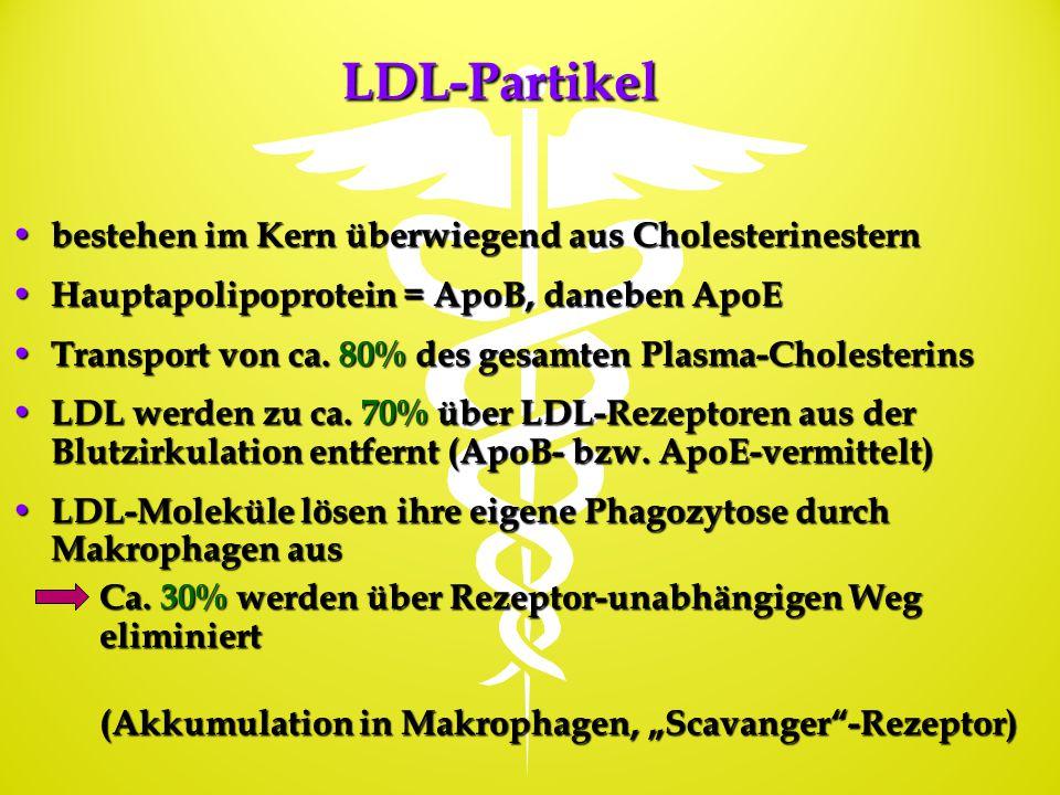 LDL-Partikel bestehen im Kern überwiegend aus Cholesterinestern bestehen im Kern überwiegend aus Cholesterinestern Hauptapolipoprotein = ApoB, daneben