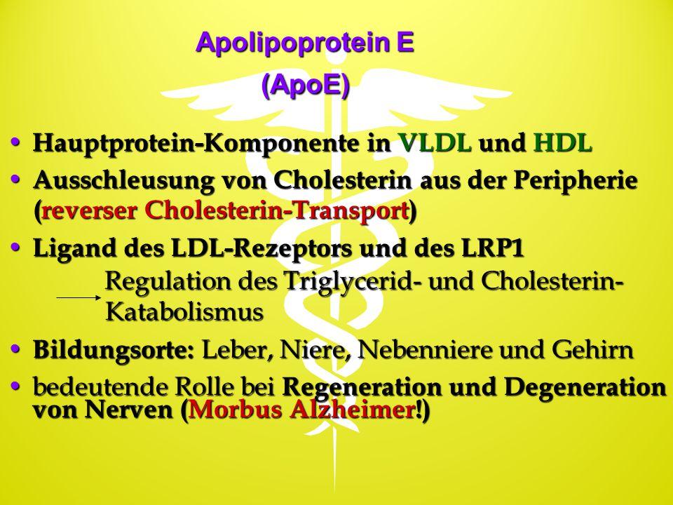 Apolipoprotein E (ApoE) Hauptprotein-Komponente in VLDL und HDL Hauptprotein-Komponente in VLDL und HDL Ausschleusung von Cholesterin aus der Peripher