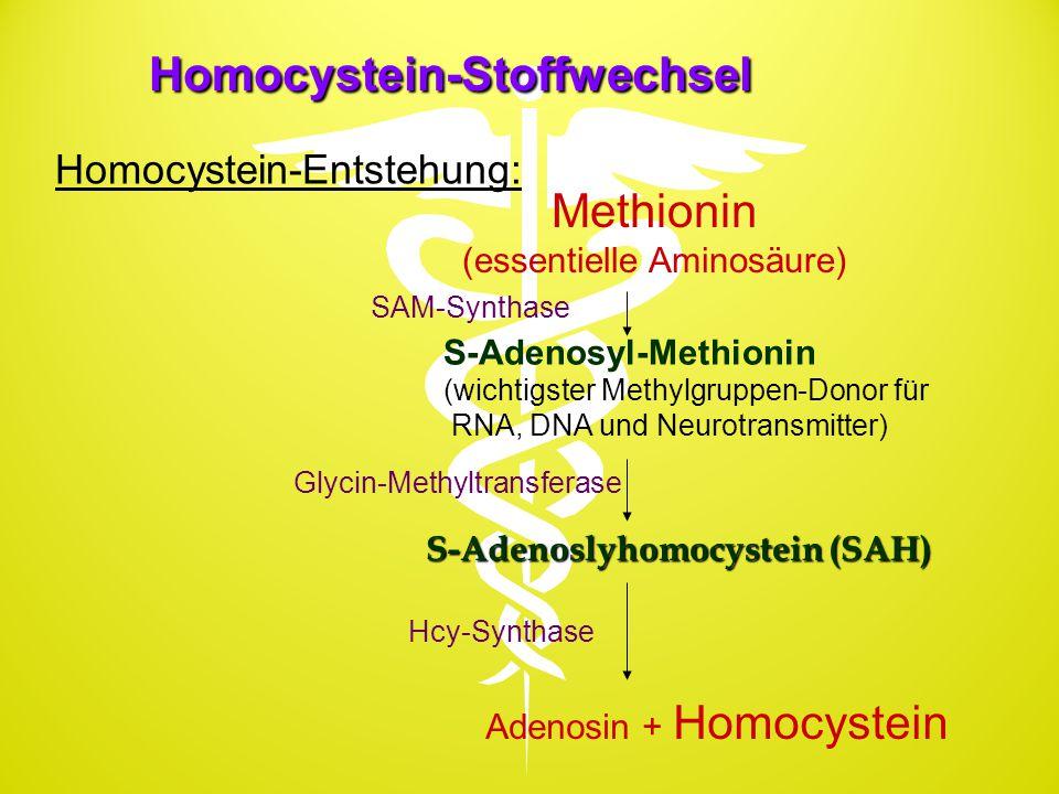Homocystein-Stoffwechsel S-Adenoslyhomocystein (SAH) Methionin (essentielle Aminosäure) S-Adenosyl-Methionin (wichtigster Methylgruppen-Donor für RNA,