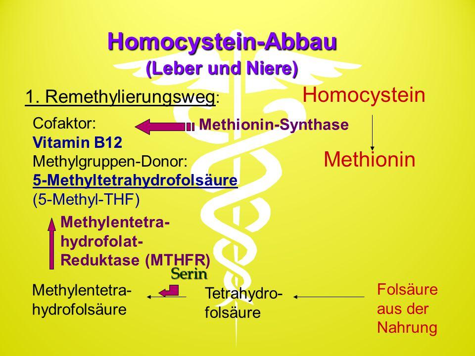 Homocystein-Abbau (Leber und Niere) Serin Homocystein Methionin Folsäure aus der Nahrung Tetrahydro- folsäure 1. Remethylierungsweg : Methionin-Syntha