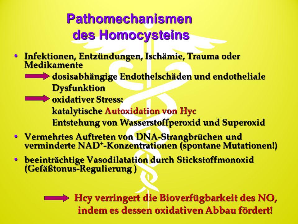 Pathomechanismen des Homocysteins Infektionen, Entzündungen, Ischämie, Trauma oder Medikamente Infektionen, Entzündungen, Ischämie, Trauma oder Medika