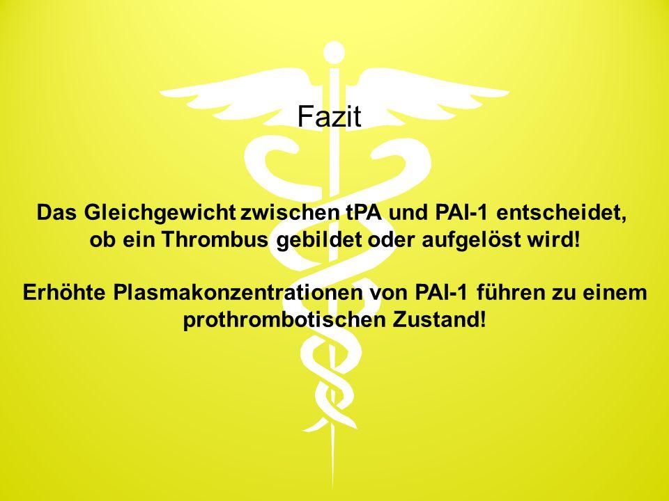 Das Gleichgewicht zwischen tPA und PAI-1 entscheidet, ob ein Thrombus gebildet oder aufgelöst wird! Erhöhte Plasmakonzentrationen von PAI-1 führen zu
