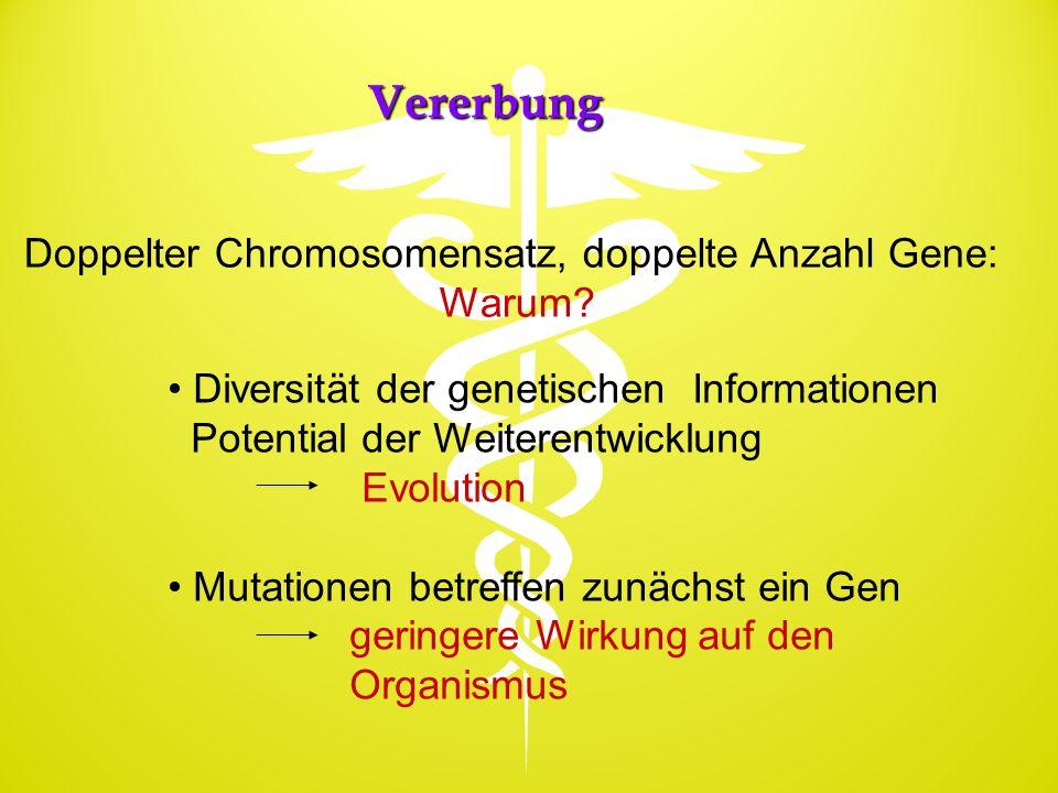 Doppelter Chromosomensatz, doppelte Anzahl Gene: Warum? Diversität der genetischen Informationen Potential der Weiterentwicklung Evolution Mutationen