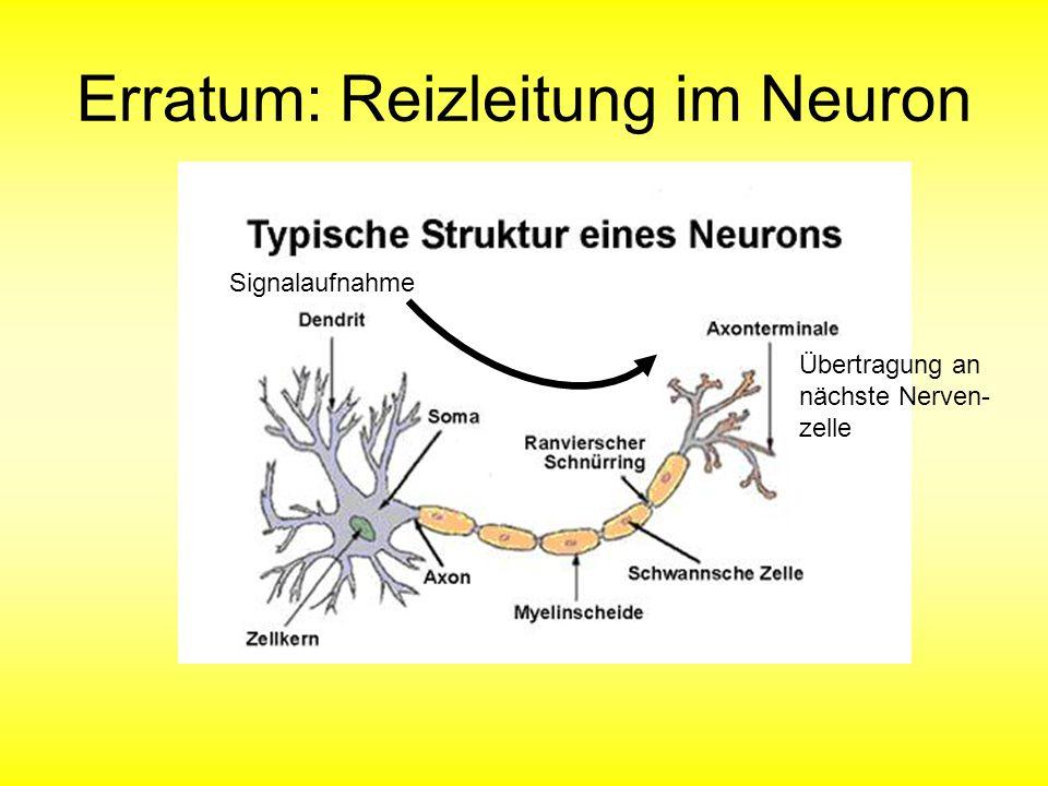 Erratum: Reizleitung im Neuron Signalaufnahme Übertragung an nächste Nerven- zelle
