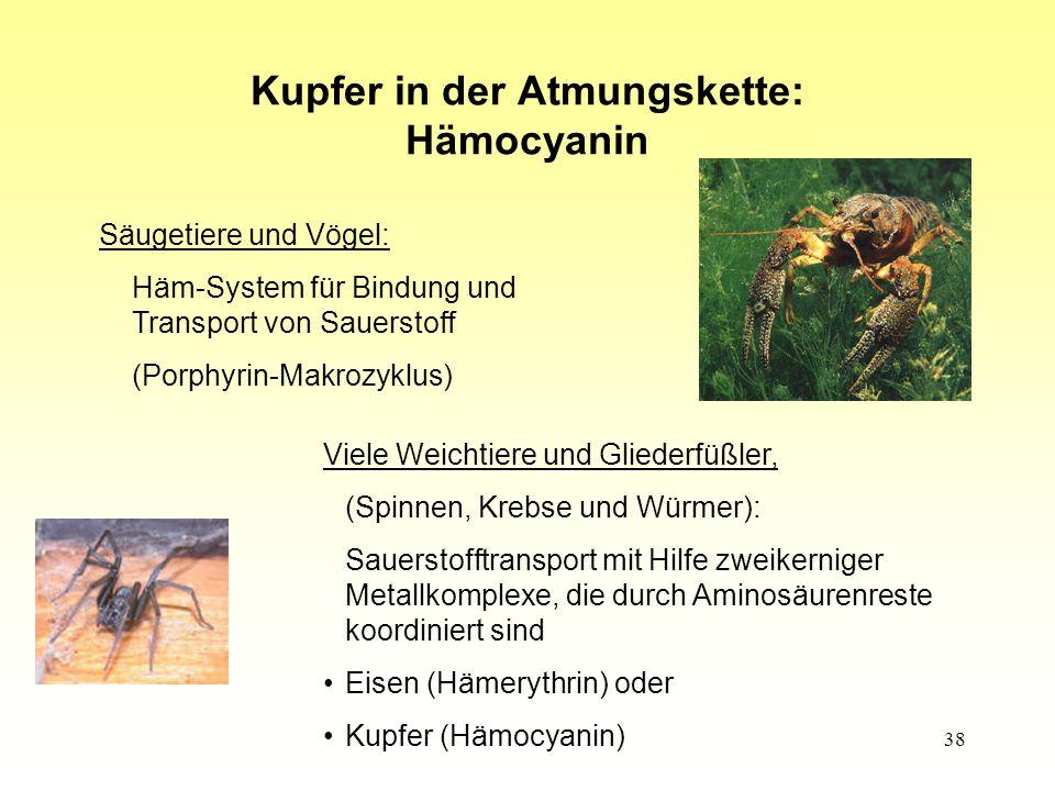 38 Kupfer in der Atmungskette: Hämocyanin Säugetiere und Vögel: Häm-System für Bindung und Transport von Sauerstoff (Porphyrin-Makrozyklus) Viele Weichtiere und Gliederfüßler, (Spinnen, Krebse und Würmer): Sauerstofftransport mit Hilfe zweikerniger Metallkomplexe, die durch Aminosäurenreste koordiniert sind Eisen (Hämerythrin) oder Kupfer (Hämocyanin)