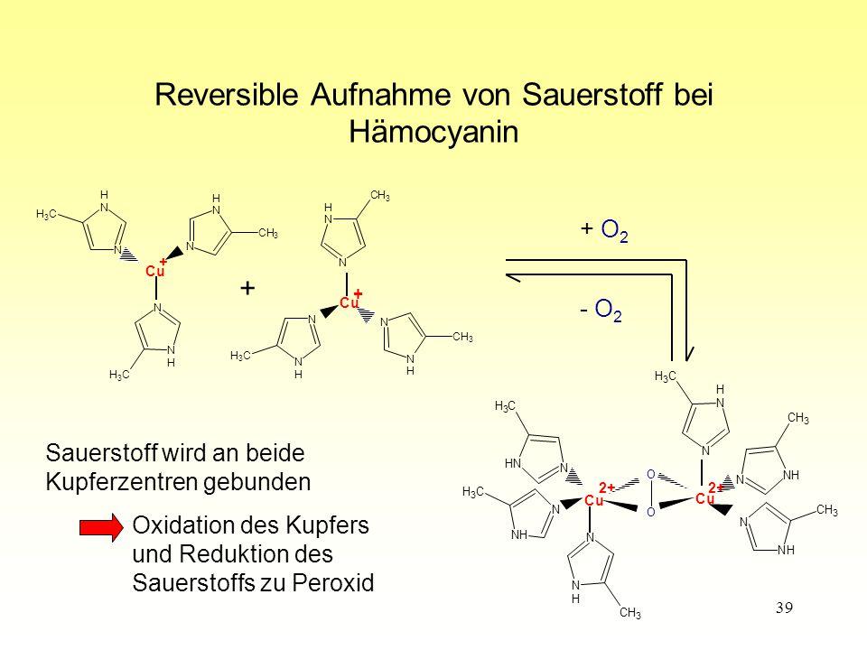 39 Reversible Aufnahme von Sauerstoff bei Hämocyanin CH 3 N H N CH 3 N H N CH 3 N H N Cu + CH 3 N H N CH 3 N H N CH 3 N H N + + CH - O 2 Sauerstoff wird an beide Kupferzentren gebunden Oxidation des Kupfers und Reduktion des Sauerstoffs zu Peroxid 3 CH 3 CH 3 H H N NH N N N Cu 2+ O O CH 3 NH N CH 3 NH N N Cu CH 3 NH N + O 2 2+