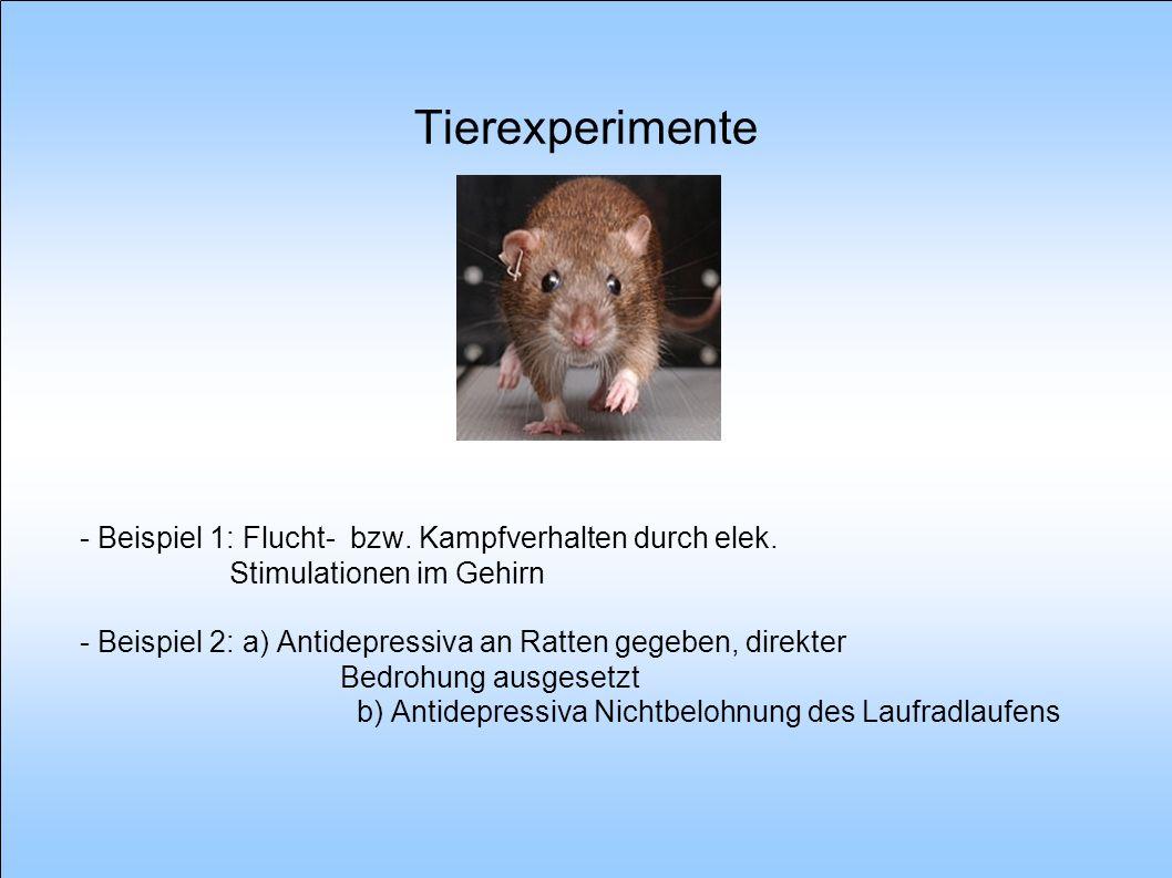 Tierexperimente - Beispiel 1: Flucht- bzw. Kampfverhalten durch elek. Stimulationen im Gehirn - Beispiel 2: a) Antidepressiva an Ratten gegeben, direk