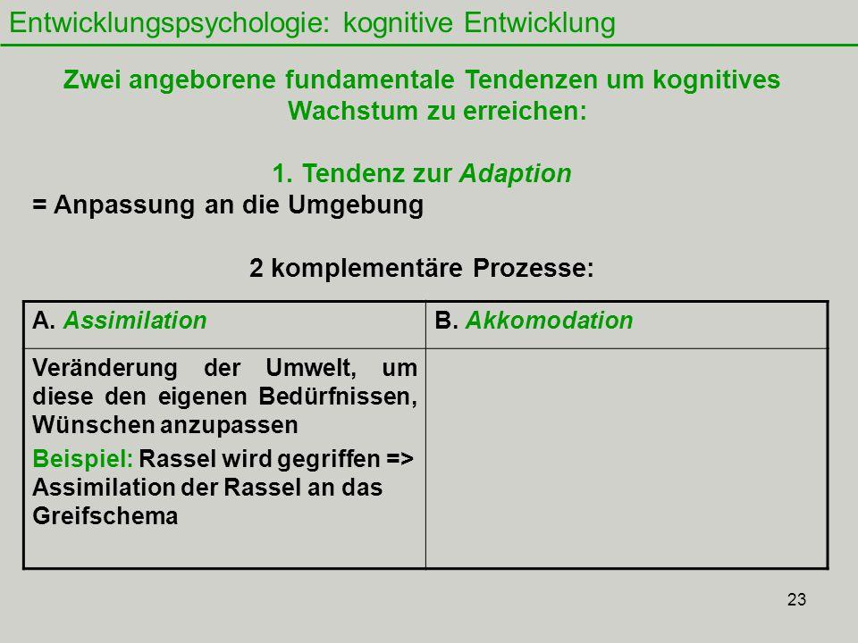 23 Entwicklungspsychologie: kognitive Entwicklung Zwei angeborene fundamentale Tendenzen um kognitives Wachstum zu erreichen: 1.