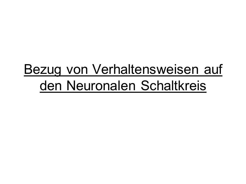 Bezug von Verhaltensweisen auf den Neuronalen Schaltkreis