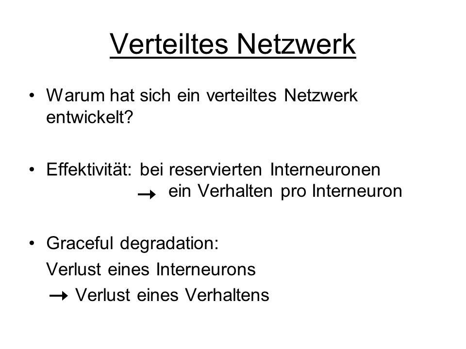 Verteiltes Netzwerk Warum hat sich ein verteiltes Netzwerk entwickelt? Effektivität: bei reservierten Interneuronen ein Verhalten pro Interneuron Grac