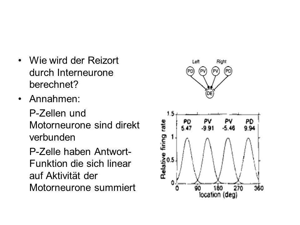 Wie wird der Reizort durch Interneurone berechnet? Annahmen: P-Zellen und Motorneurone sind direkt verbunden P-Zelle haben Antwort- Funktion die sich