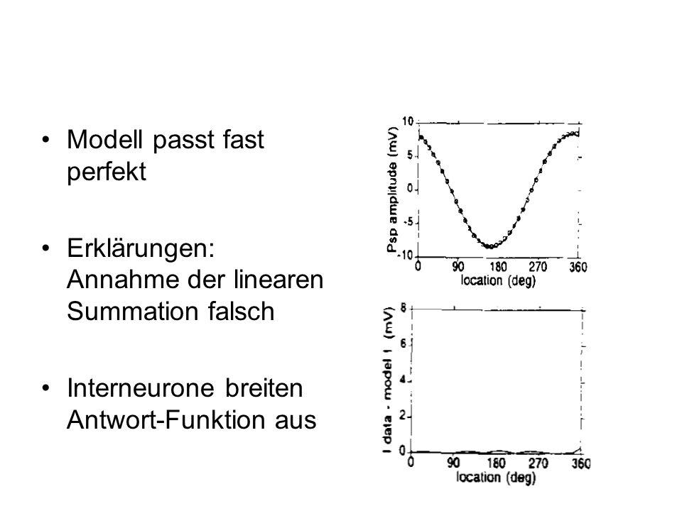 Modell passt fast perfekt Erklärungen: Annahme der linearen Summation falsch Interneurone breiten Antwort-Funktion aus