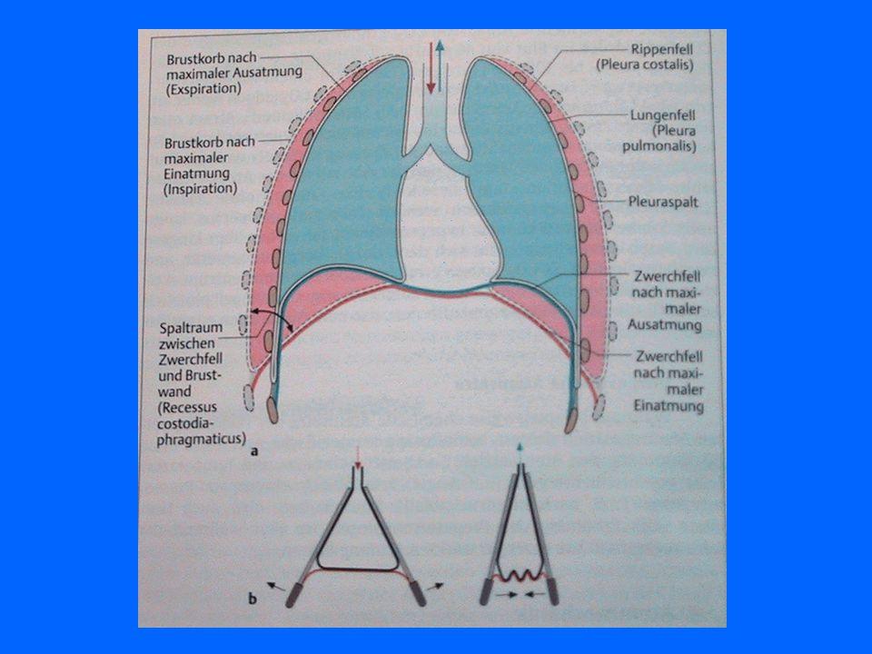 Atemmechanik Einatmung (Inspiration) ist ein aktiver Vorgang wobei der Brustkorb mit Hilfe der Atemmuskulatur erweitert (gehoben) wird. Ausatmung (Exp