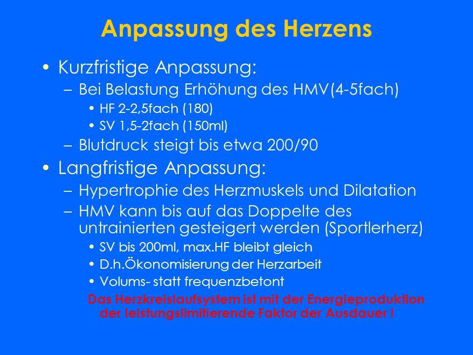 Herzphysiologische Begriffe Herzfrequenz (HF) –Schläge/min 60-90 Schlagvolumen (SV) –Auswurfvolumen der Systole ca. 75 ml Herzminutenvolumen (HMV) –SV
