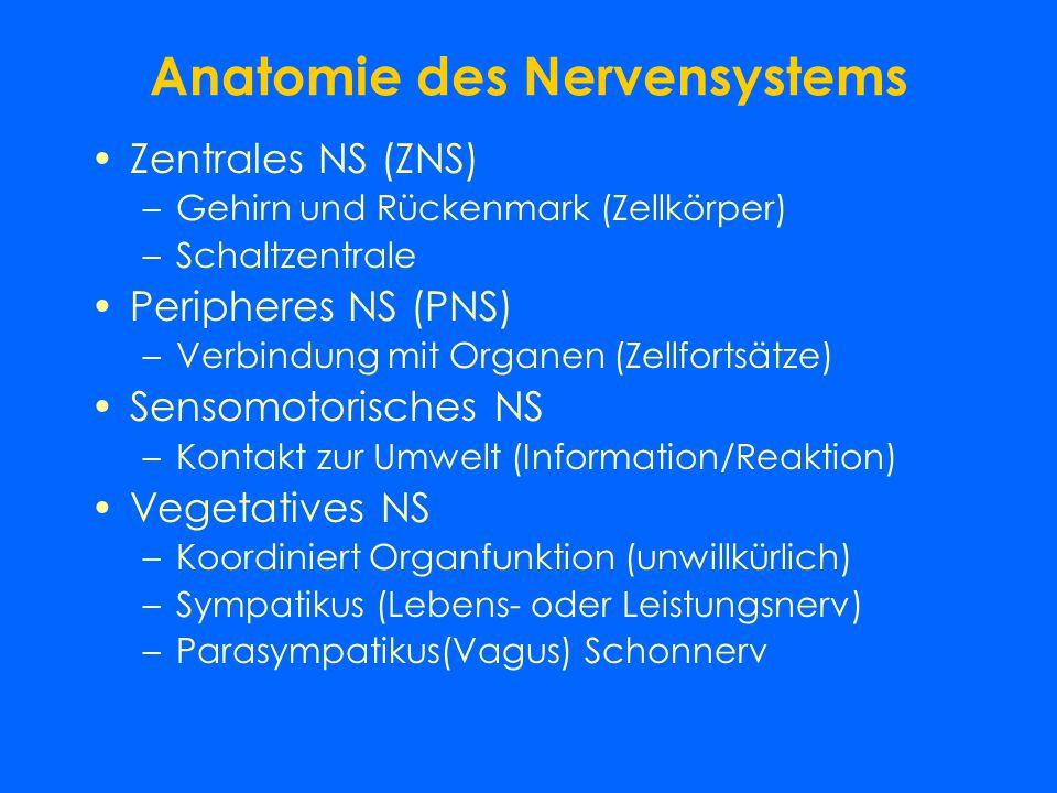 Physiologie der Geschlechtsorgane Reifung in der Pubertät Hormone: Testosteron bzw. Östrogen Menstruationszyklus –Beginn in der Pubertät –Normalerweis
