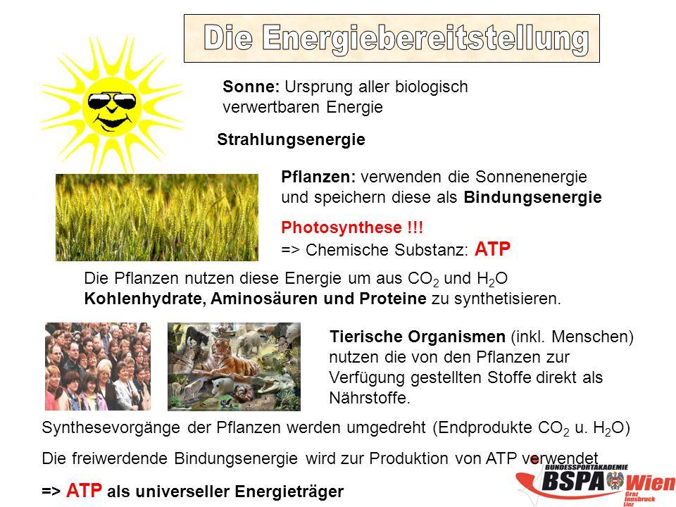 Sonne: Ursprung aller biologisch verwertbaren Energie Strahlungsenergie Pflanzen: verwenden die Sonnenenergie und speichern diese als Bindungsenergie Photosynthese !!.