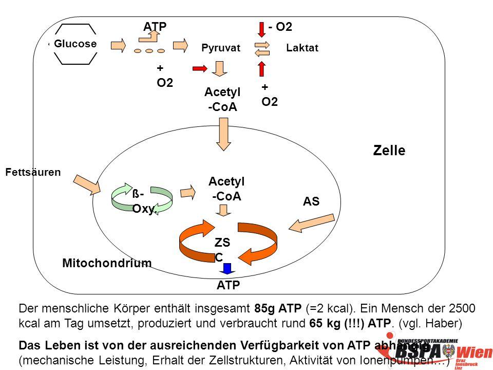 ZS C ß- Oxy.