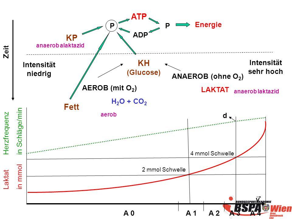 ATP P Energie ADP KH (Glucose) AEROB (mit O 2 ) H 2 O + CO 2 ANAEROB (ohne O 2 ) LAKTAT v 4 mmol Schwelle 2 mmol Schwelle Laktat in mmol Herzfrequenz in Schläge/min d P KP Fett anaerob alaktazid anaerob laktazid aerob A 0A 1A 2A 3A 4 Intensität niedrig Intensität sehr hoch Zeit