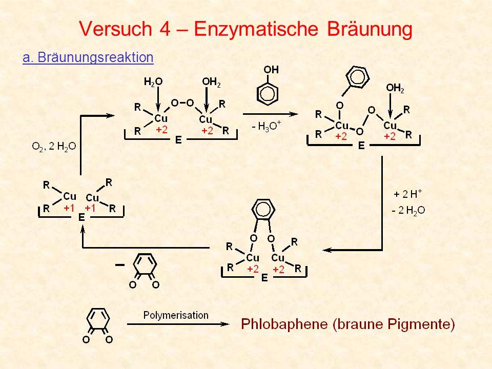 Versuch 4 – Enzymatische Bräunung a. Bräunungsreaktion