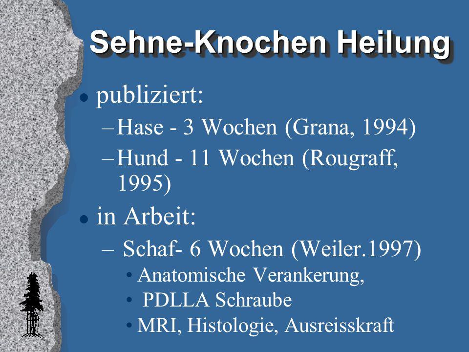 Sehne-Knochen Heilung l publiziert: –Hase - 3 Wochen (Grana, 1994) –Hund - 11 Wochen (Rougraff, 1995) l in Arbeit: – Schaf- 6 Wochen (Weiler.1997) Ana