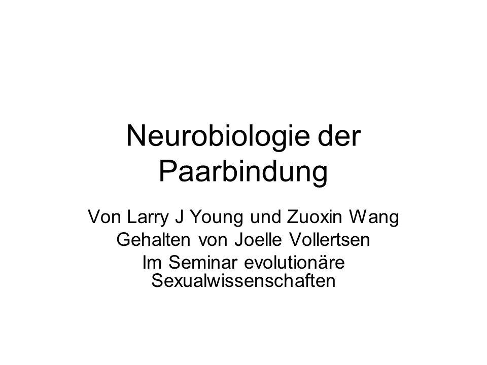 Ein neurobiologisches Modell anhand von monogamen Nagern Die Fähigkeit des Menschen stabile Paarbindungen einzugehen hat eine definierbare molekulare und neuronale Basis Monogam: ein Mann und eine Frau leben exklusive (selektive) miteinander.