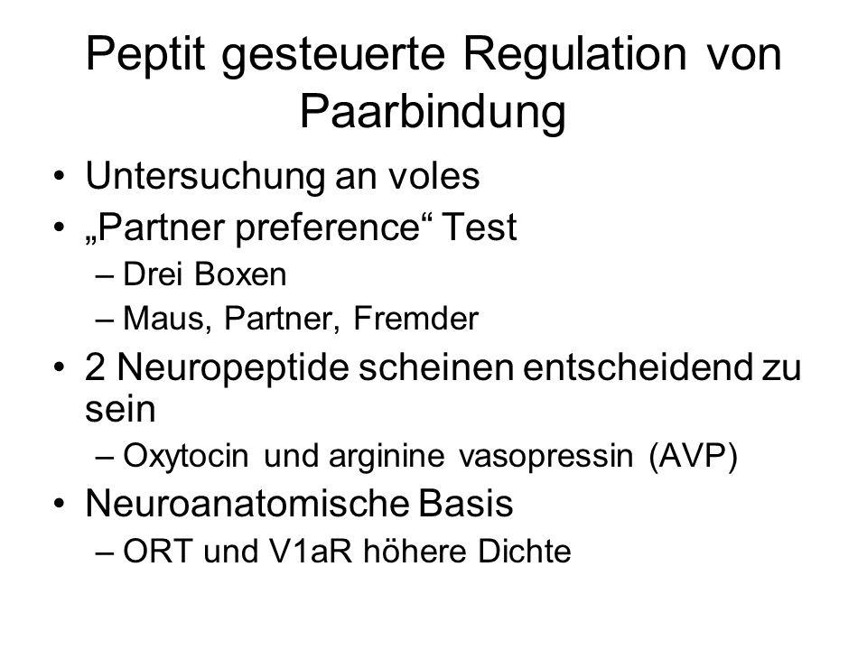 """Peptit gesteuerte Regulation von Paarbindung Untersuchung an voles """"Partner preference Test –Drei Boxen –Maus, Partner, Fremder 2 Neuropeptide scheinen entscheidend zu sein –Oxytocin und arginine vasopressin (AVP) Neuroanatomische Basis –ORT und V1aR höhere Dichte"""