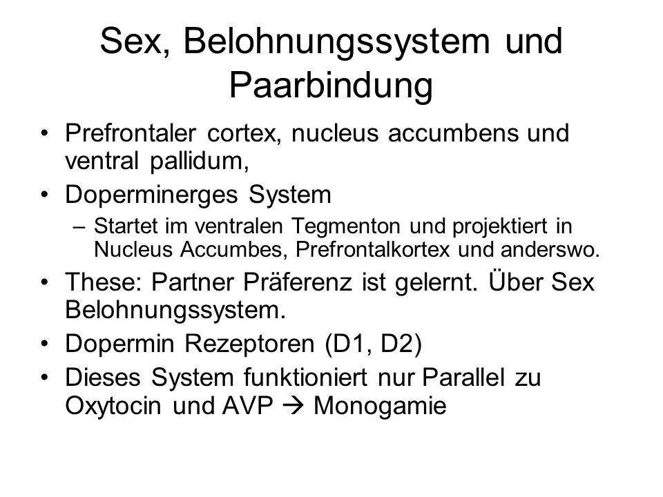 Sex, Belohnungssystem und Paarbindung Prefrontaler cortex, nucleus accumbens und ventral pallidum, Doperminerges System –Startet im ventralen Tegmenton und projektiert in Nucleus Accumbes, Prefrontalkortex und anderswo.